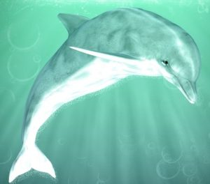 use dolphin