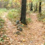 Weekend reflection -Two roads diverged in a woods