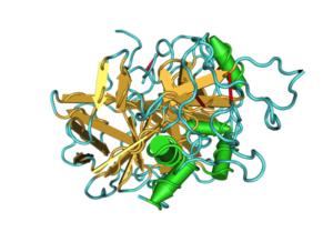 2hpq_alpha-thrombin02